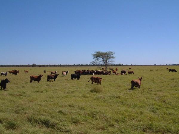 Пустыня Чако в Парагвае