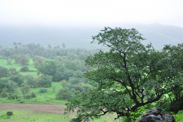 Салалах - зеленый оазис посреди бесконечных песков