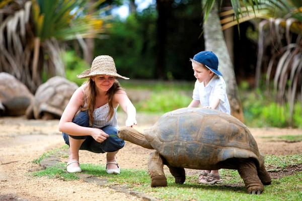 Гигантская черепаха в заповеднике Ля Ваниль на Юге Маврикия
