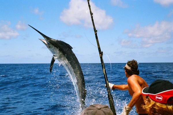 Рыбалка - голубой марлин