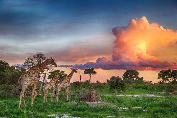Экзотика Ботсваны